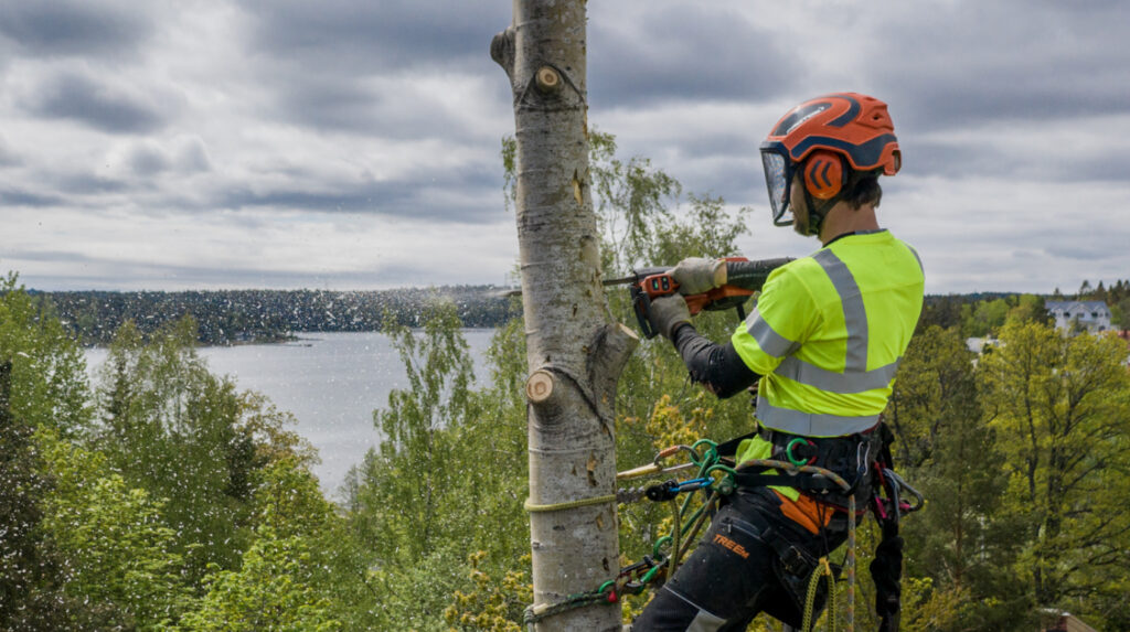professionell sektionsfällning på Värmdö och i Stockholm